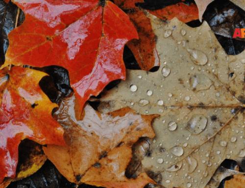 Bricolage d'autunno